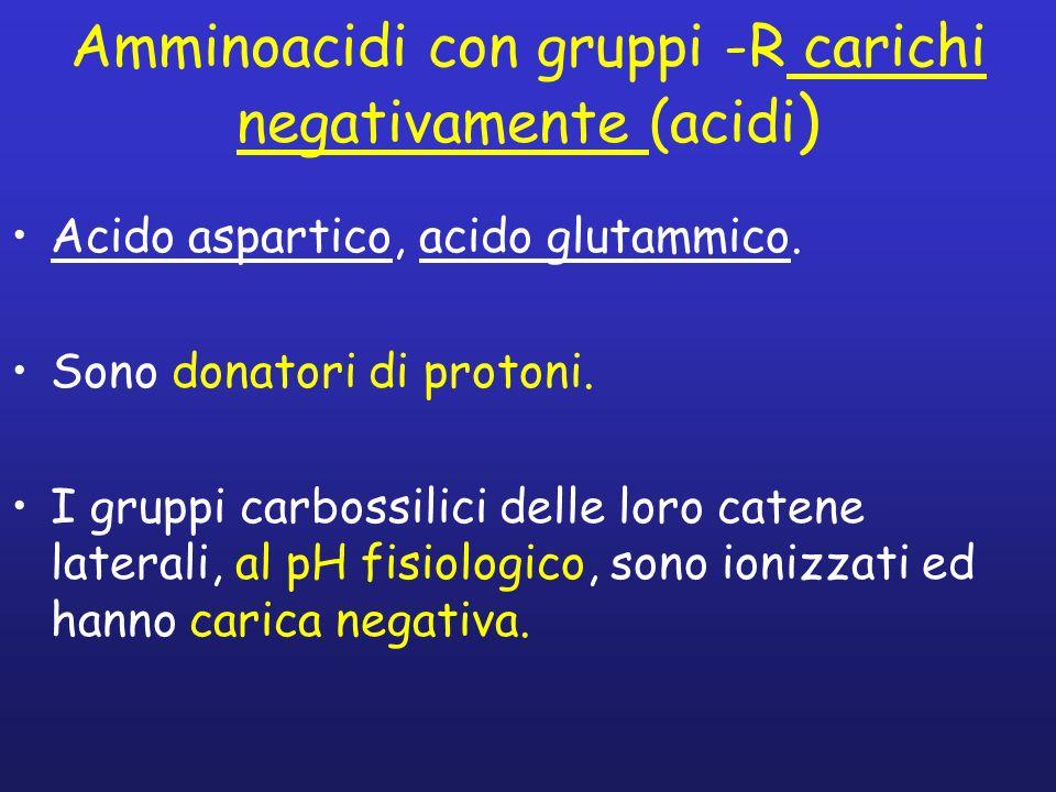 Amminoacidi con gruppi -R carichi negativamente (acidi ) Acido aspartico, acido glutammico. Sono donatori di protoni. I gruppi carbossilici delle loro