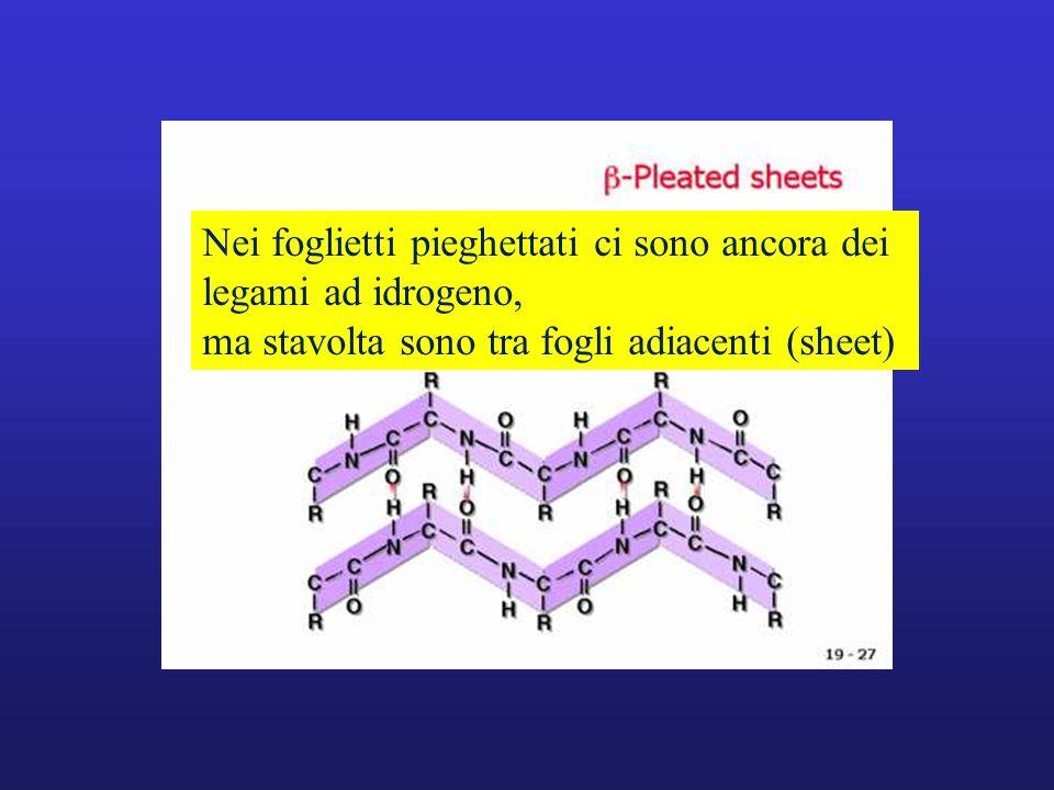 Nei foglietti pieghettati ci sono ancora dei legami ad idrogeno, ma stavolta sono tra fogli adiacenti (sheet)
