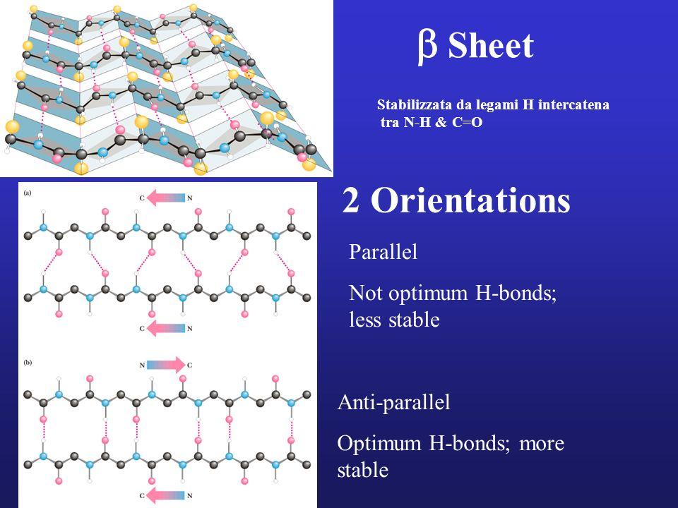 Sheet Stabilizzata da legami H intercatena tra N-H & C=O 2 Orientations Parallel Not optimum H-bonds; less stable Anti-parallel Optimum H-bonds; more
