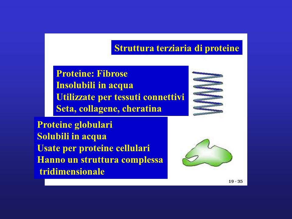 Proteine: Fibrose Insolubili in acqua Utilizzate per tessuti connettivi Seta, collagene, cheratina Proteine globulari Solubili in acqua Usate per prot