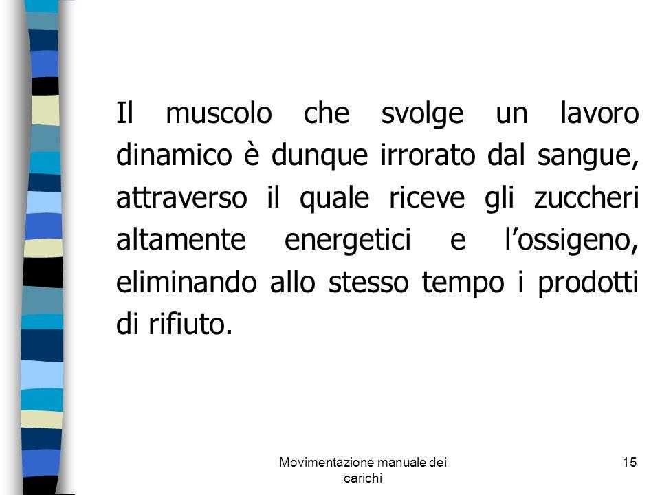 Movimentazione manuale dei carichi 15 Il muscolo che svolge un lavoro dinamico è dunque irrorato dal sangue, attraverso il quale riceve gli zuccheri a