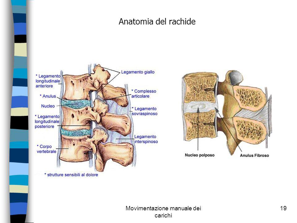 Movimentazione manuale dei carichi 19 Anatomia del rachide