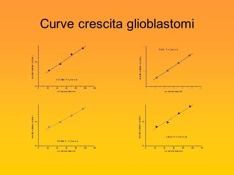 Curve crescita glioblastomi
