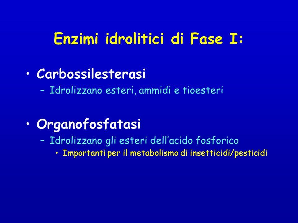 Enzimi idrolitici di Fase I: Carbossilesterasi –Idrolizzano esteri, ammidi e tioesteri Organofosfatasi –Idrolizzano gli esteri dellacido fosforico Importanti per il metabolismo di insetticidi/pesticidi