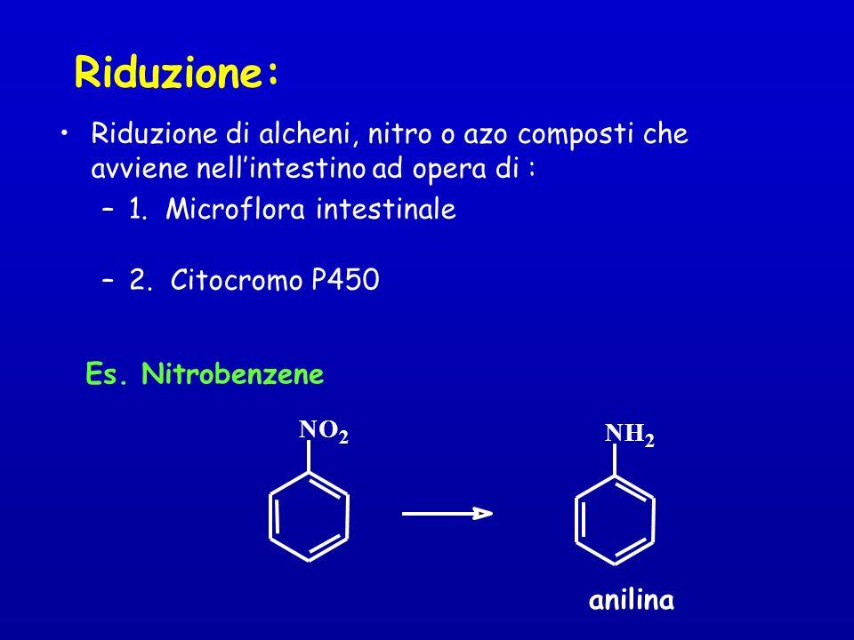 Riduzione: Riduzione di alcheni, nitro o azo composti che avviene nellintestino ad opera di : –1.