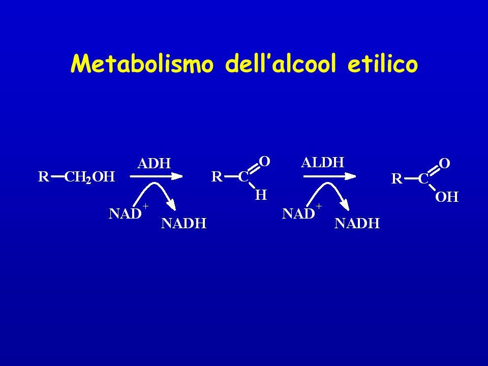 Metabolismo dellalcool etilico