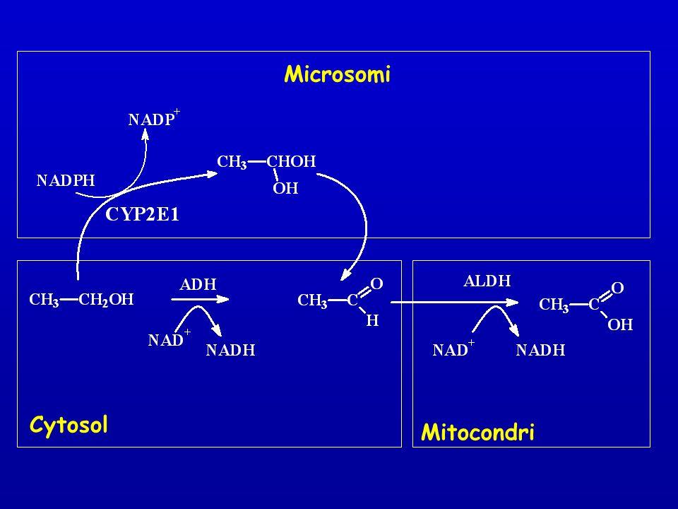 Microsomi Cytosol Mitocondri