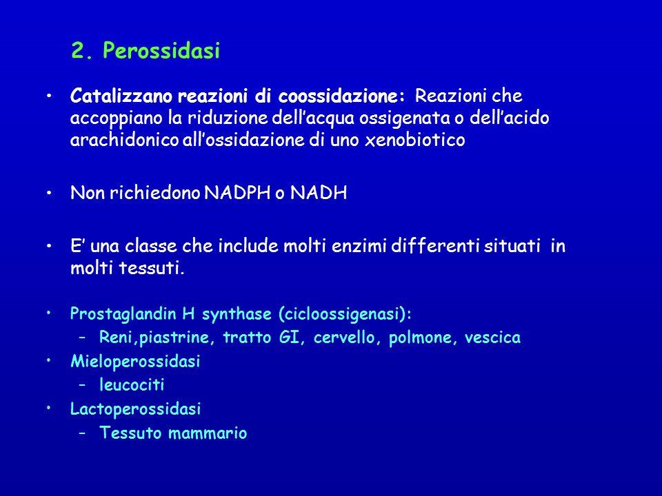 2. Perossidasi Catalizzano reazioni di coossidazione: Reazioni che accoppiano la riduzione dellacqua ossigenata o dellacido arachidonico allossidazion