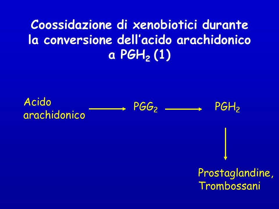 Coossidazione di xenobiotici durante la conversione dellacido arachidonico a PGH 2 (1) Acido arachidonico PGG 2 PGH 2 Prostaglandine, Trombossani