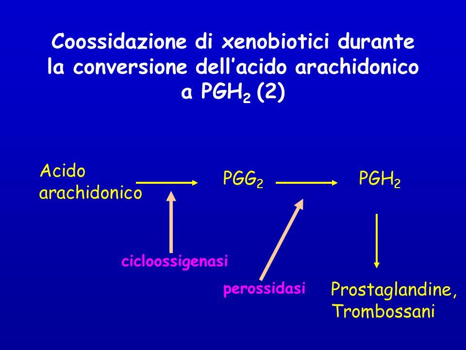 Coossidazione di xenobiotici durante la conversione dellacido arachidonico a PGH 2 (2) Acido arachidonico PGG 2 PGH 2 Prostaglandine, Trombossani cicloossigenasi perossidasi