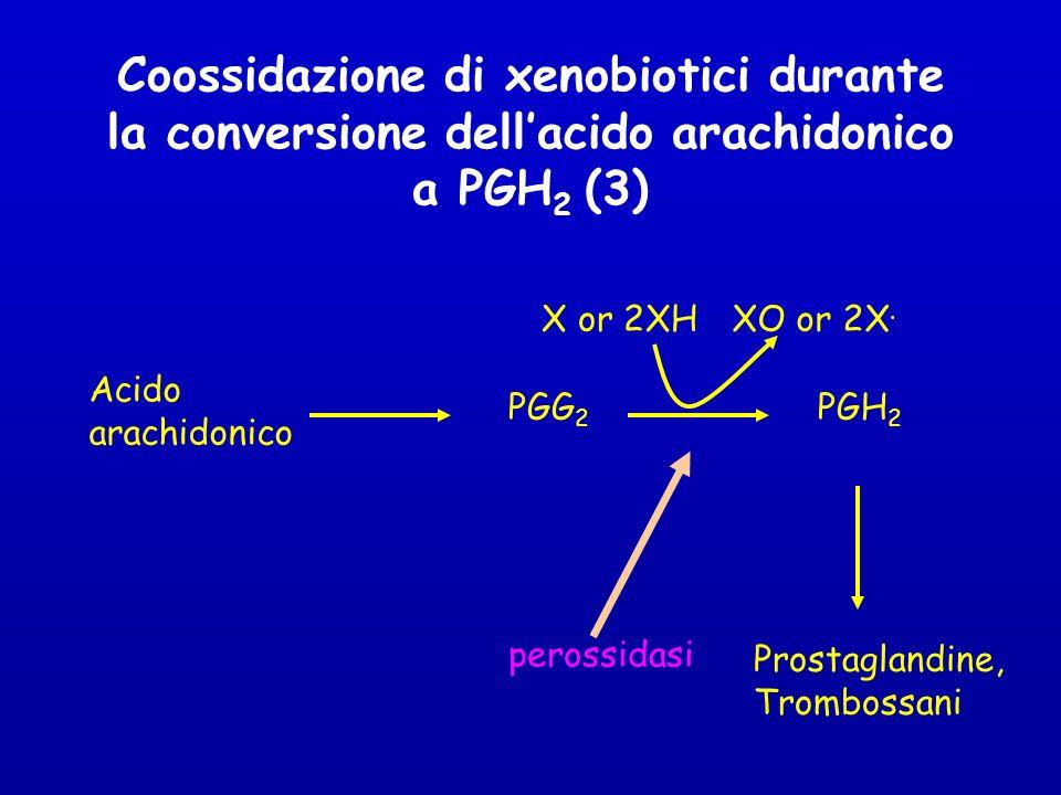 Coossidazione di xenobiotici durante la conversione dellacido arachidonico a PGH 2 (3) Acido arachidonico PGG 2 PGH 2 Prostaglandine, Trombossani perossidasi X or 2XHXO or 2X.