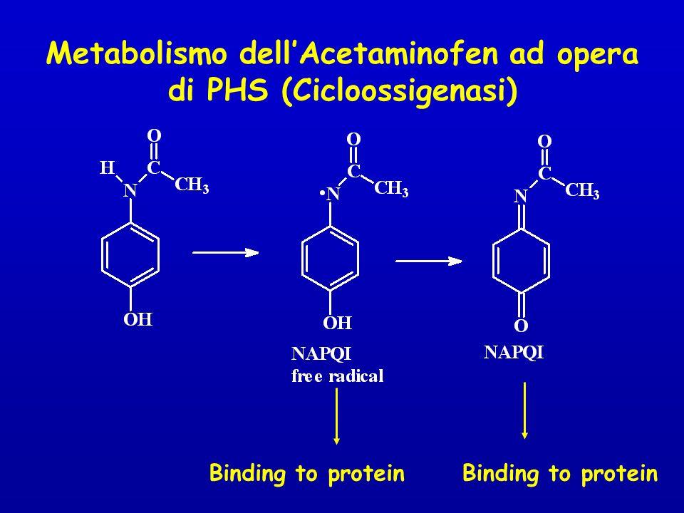 Metabolismo dellAcetaminofen ad opera di PHS (Cicloossigenasi) Binding to protein