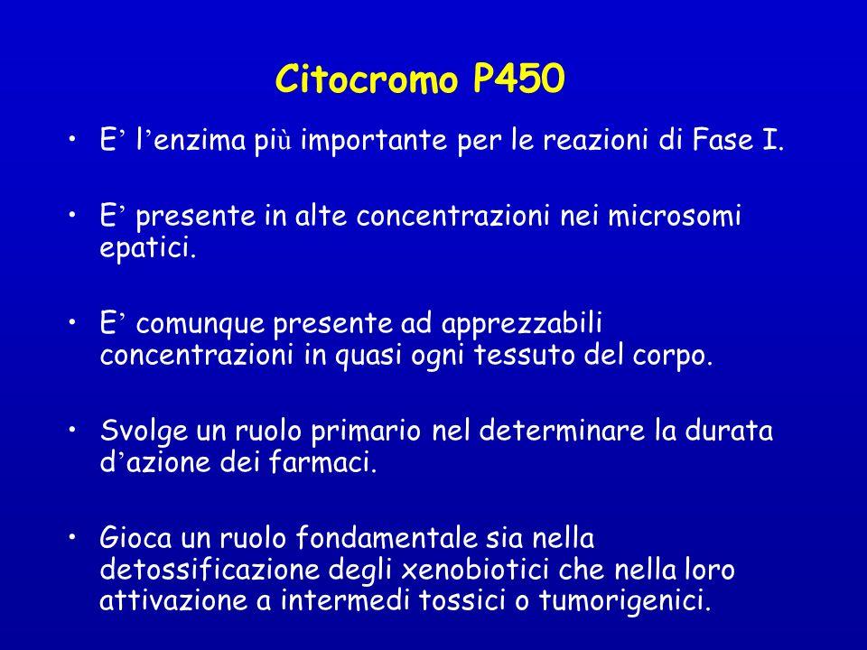 Citocromo P450 E l enzima pi ù importante per le reazioni di Fase I.