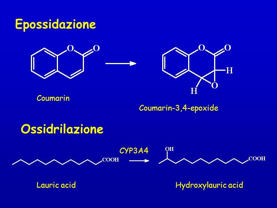 Coumarin Coumarin-3,4-epoxide Epossidazione CYP3A4 Lauric acidHydroxylauric acid Ossidrilazione