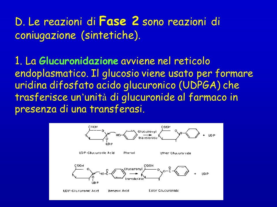 D.Le reazioni di Fase 2 sono reazioni di coniugazione (sintetiche).
