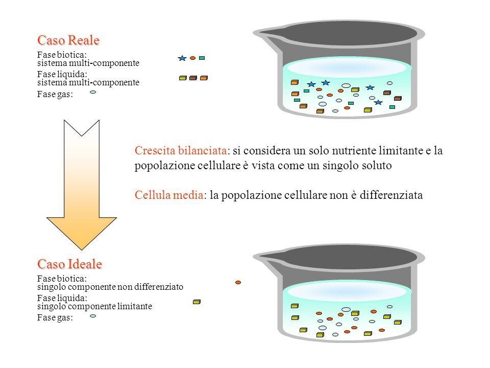 Fase biotica: sistema multi-componente Fase liquida: sistema multi-componente Fase gas: Caso Reale Fase biotica: singolo componente non differenziato
