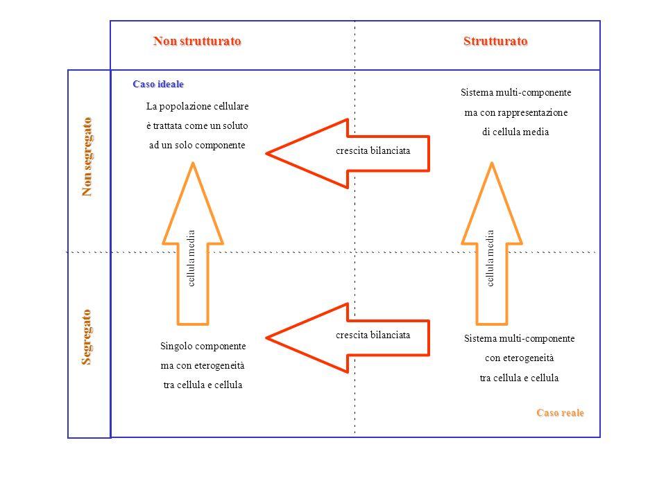 Non strutturato Caso ideale La popolazione cellulare è trattata come un soluto ad un solo componente Strutturato Sistema multi-componente con eterogen