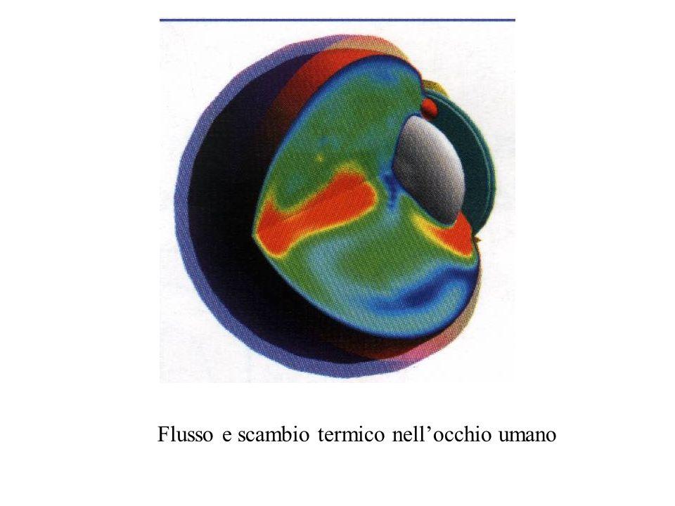 Flusso e scambio termico nellocchio umano