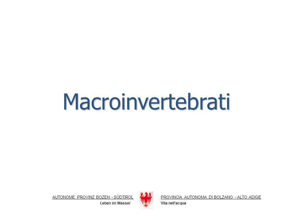 Macroinvertebrati AUTONOME PROVINZ BOZEN - SÜDTIROLPROVINCIA AUTONOMA DI BOLZANO - ALTO ADIGE Vita nellacqua Leben im Wasser