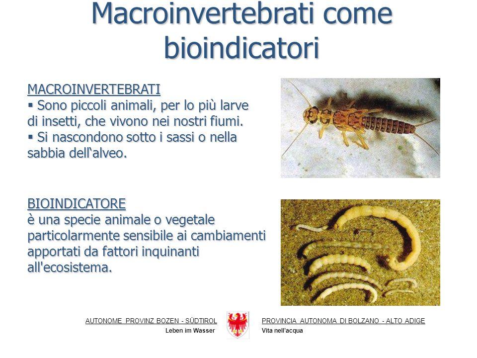 Macroinvertebrati come bioindicatori MACROINVERTEBRATI Sono piccoli animali, per lo più larve di insetti, che vivono nei nostri fiumi.