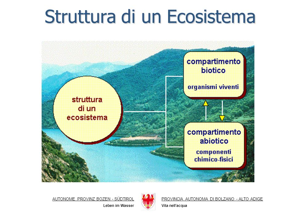 Acque superficiali AUTONOME PROVINZ BOZEN - SÜDTIROLPROVINCIA AUTONOMA DI BOLZANO - ALTO ADIGE Vita nellacqua Leben im Wasser Ecosistema fiume Ecosistemalago Ecosistema lago