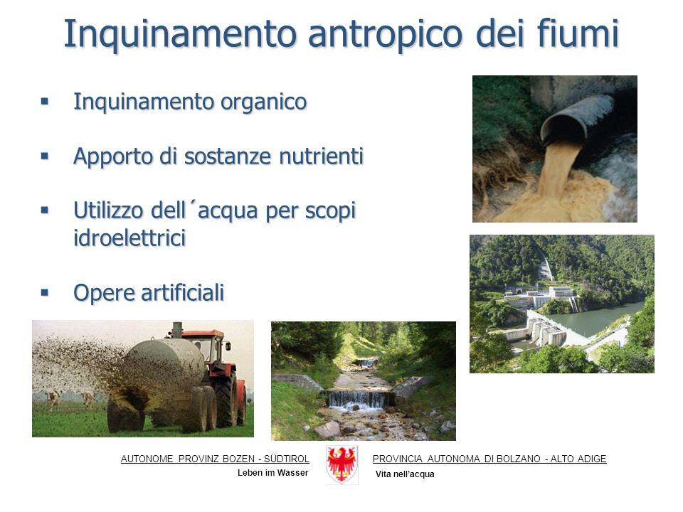 Punti di campionamento Daphnia magna 24 h (% immobilizzazione) Vibrio fischeri 15 (% di effetto) Rio Gambero 1 sorgente01,6 Rio Gambero 2 fitodepurazione0-0,3 Rio Gambero 3 valle confluenza valle confluenza03,4 Punti di campionamento Daphnia magna 24 h (% immobilizzazione) Vibrio fischeri 15 (% di effetto) Rio Gambero 1 sorgente01,6 Rio Gambero 2 fitodepurazione0-0,3 Rio Gambero 3 valle confluenza valle confluenza03,4 AUTONOME PROVINZ BOZEN - SÜDTIROLPROVINCIA AUTONOMA DI BOLZANO - ALTO ADIGE Inquinamento antropico dei fiumi Inquinamento organico Inquinamento organico Apporto di sostanze nutrienti Apporto di sostanze nutrienti Utilizzo dell´acqua per scopi idroelettrici Utilizzo dell´acqua per scopi idroelettrici Opere artificiali Opere artificiali Vita nellacqua Leben im Wasser