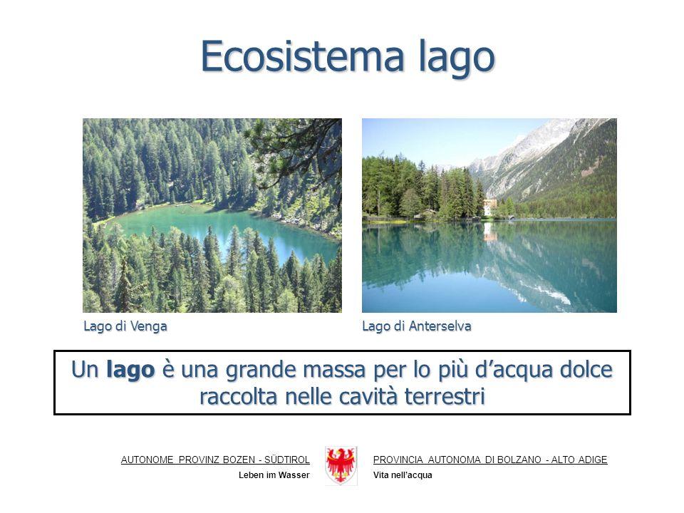 Ecosistema lago AUTONOME PROVINZ BOZEN - SÜDTIROLPROVINCIA AUTONOMA DI BOLZANO - ALTO ADIGE Vita nellacqua Leben im Wasser Un lago è una grande massa per lo più dacqua dolce raccolta nelle cavità terrestri Lago di Anterselva Lago di Venga