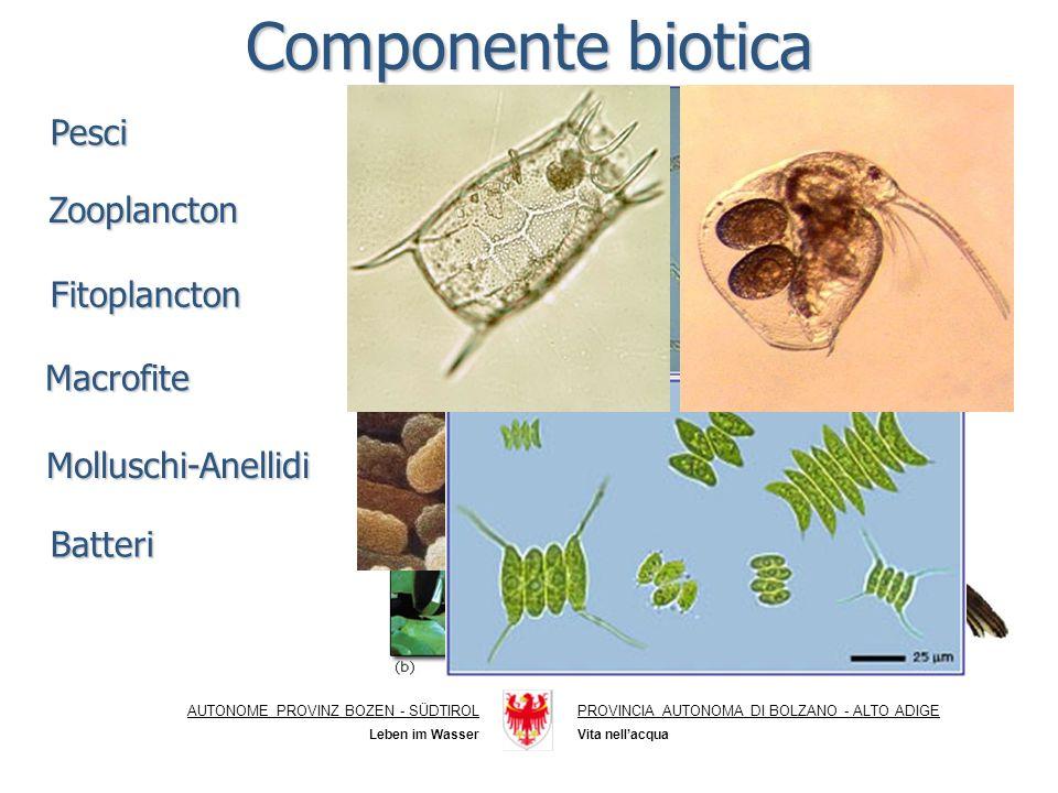 AUTONOME PROVINZ BOZEN - SÜDTIROLPROVINCIA AUTONOMA DI BOLZANO - ALTO ADIGE Vita nellacqua Leben im Wasser Componente biotica Pesci Zooplancton Fitoplancton Macrofite Batteri Molluschi-Anellidi