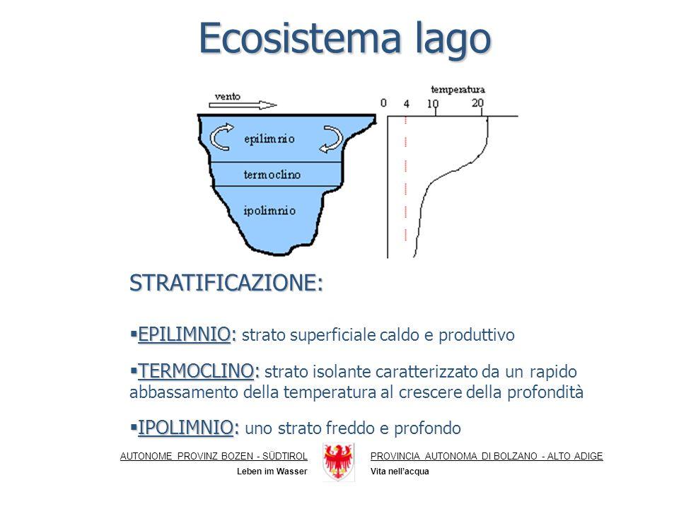 Ecosistema lago AUTONOME PROVINZ BOZEN - SÜDTIROLPROVINCIA AUTONOMA DI BOLZANO - ALTO ADIGE Vita nellacqua Leben im Wasser STRATIFICAZIONE: EPILIMNIO: EPILIMNIO: strato superficiale caldo e produttivo TERMOCLINO: TERMOCLINO: strato isolante caratterizzato da un rapido abbassamento della temperatura al crescere della profondità IPOLIMNIO: IPOLIMNIO: uno strato freddo e profondo
