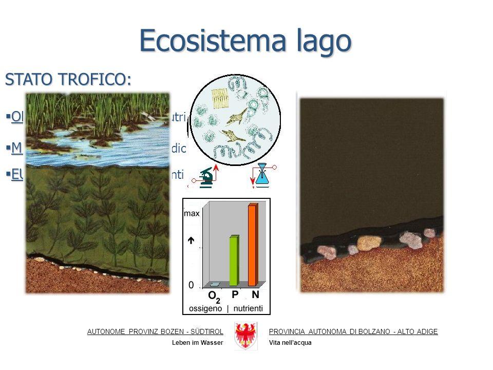 Ecosistema lago AUTONOME PROVINZ BOZEN - SÜDTIROLPROVINCIA AUTONOMA DI BOLZANO - ALTO ADIGE Vita nellacqua Leben im Wasser STATO TROFICO: OLIGOTROFO: OLIGOTROFO: scarsità di nutrienti MESOTROFO: MESOTROFO: stato intermedio EUTROFO: EUTROFO: eccesso di nutrienti