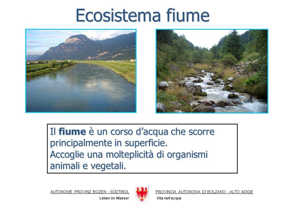 Punti di campionamento Daphnia magna 24 h (% immobilizzazione) Vibrio fischeri 15 (% di effetto) Rio Gambero 1 sorgente01,6 Rio Gambero 2 fitodepurazione0-0,3 Rio Gambero 3 valle confluenza valle confluenza03,4 Punti di campionamento Daphnia magna 24 h (% immobilizzazione) Vibrio fischeri 15 (% di effetto) Rio Gambero 1 sorgente01,6 Rio Gambero 2 fitodepurazione0-0,3 Rio Gambero 3 valle confluenza valle confluenza03,4 AUTONOME PROVINZ BOZEN - SÜDTIROLPROVINCIA AUTONOMA DI BOLZANO - ALTO ADIGE Zonazione delle acque correnti Vita nellacqua Leben im Wasser Tratto superiore (RITRALE) Trattomedio (IPORITRALE, EPIPOTAMALE) Tratto medio (IPORITRALE, EPIPOTAMALE) Trattoinferiore (POTAMALE) Tratto inferiore (POTAMALE)