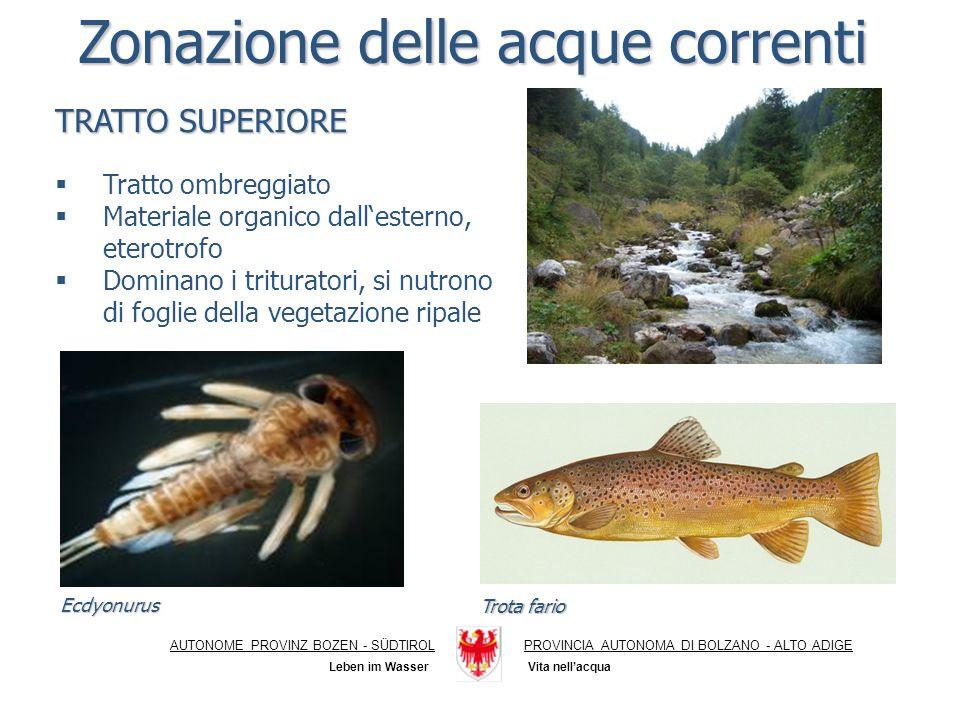 Ecotossicologia AUTONOME PROVINZ BOZEN - SÜDTIROLPROVINCIA AUTONOMA DI BOLZANO - ALTO ADIGE Vita nellacqua Leben im Wasser