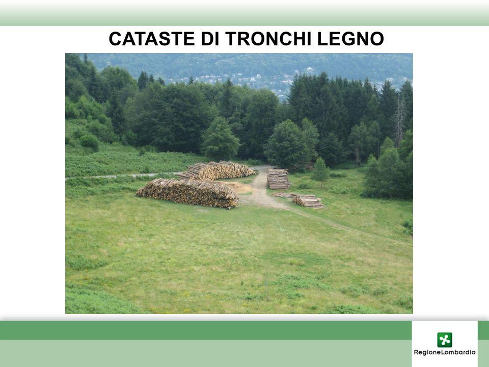 CATASTE DI TRONCHI LEGNO