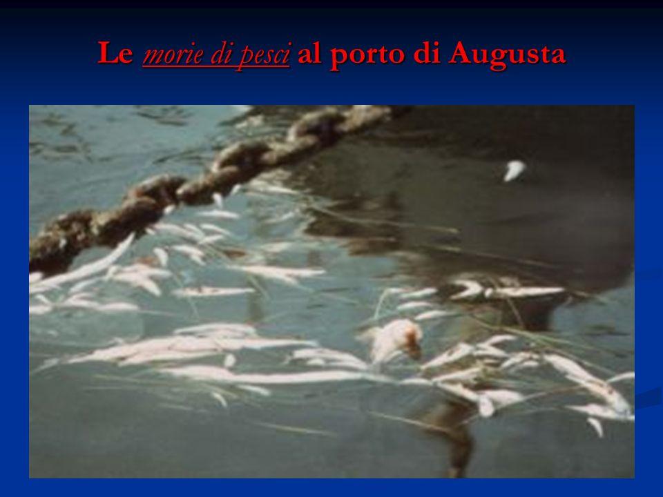 Le morie di pesci al porto di Augusta