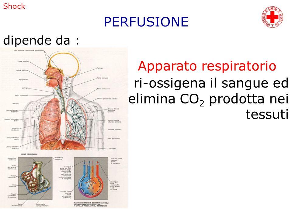 Shock dipende da : Apparato respiratorio ri-ossigena il sangue ed elimina CO 2 prodotta nei tessuti PERFUSIONE