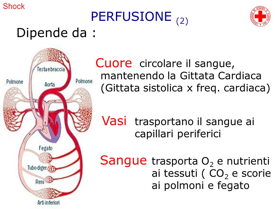 Shock Dipende da : Cuore circolare il sangue, mantenendo la Gittata Cardiaca (Gittata sistolica x freq. cardiaca) Vasi trasportano il sangue ai capill
