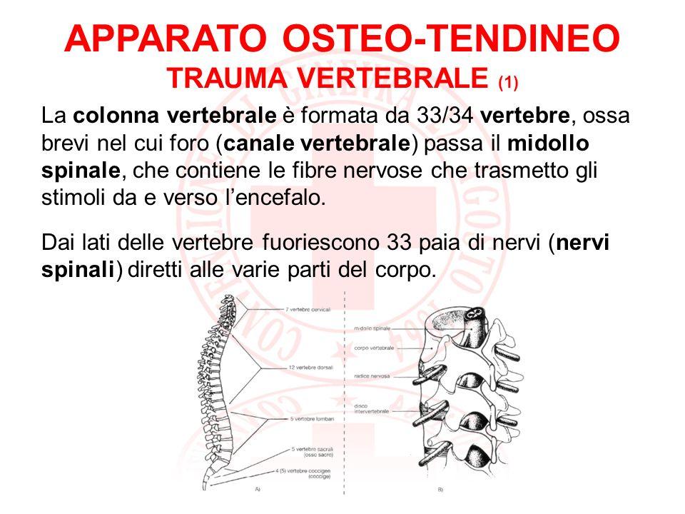 APPARATO OSTEO-TENDINEO TRAUMA VERTEBRALE (2) Le cause principali di fratture vertebrali sono: traumi diretti alla schiena traumi indiretti sulla testa, natiche e talloni I traumi spinali possono provocare fratture o lussazioni alla colonna vertebrale.