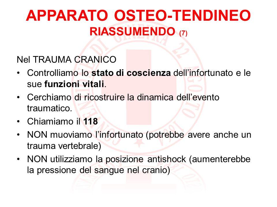 APPARATO OSTEO-TENDINEO RIASSUMENDO (8) La colonna vertebrale è formata da 33/34 vertebre nel cui canale vertebrale passa il midollo spinale: fibre nervose che trasmettono gli stimoli da e verso lencefalo.