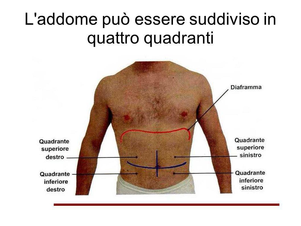L'addome può essere suddiviso in quattro quadranti