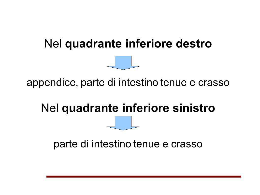 Nel quadrante inferiore destro appendice, parte di intestino tenue e crasso Nel quadrante inferiore sinistro parte di intestino tenue e crasso