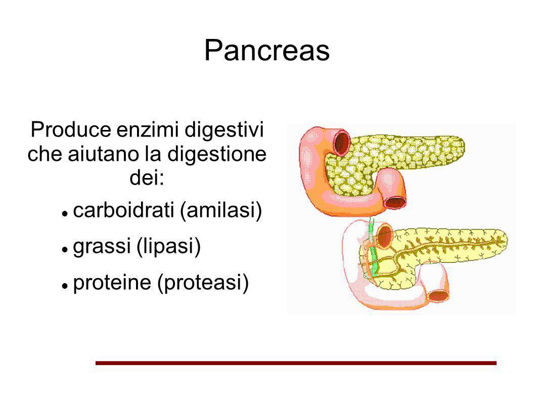 Pancreas Produce enzimi digestivi che aiutano la digestione dei: carboidrati (amilasi) grassi (lipasi) proteine (proteasi)