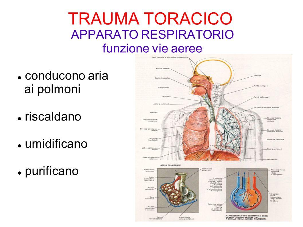 TRAUMA TORACICO APPARATO RESPIRATORIO funzione vie aeree conducono aria ai polmoni riscaldano umidificano purificano