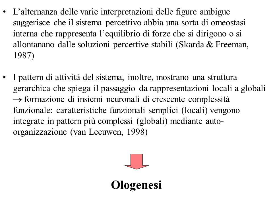Lalternanza delle varie interpretazioni delle figure ambigue suggerisce che il sistema percettivo abbia una sorta di omeostasi interna che rappresenta