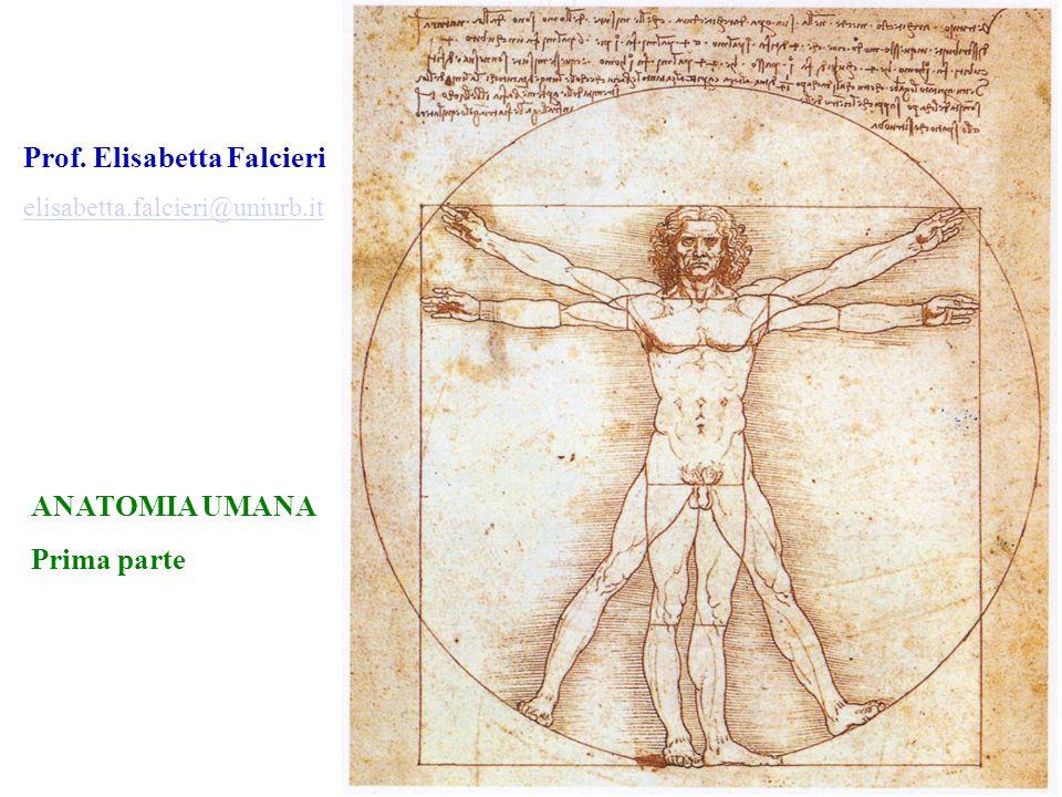 I PARTE Introduzione allanatomia.Cenni di Citologia.