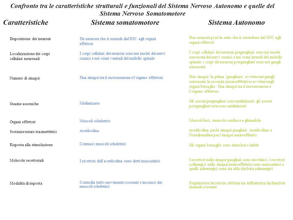 Confronto tra le caratteristiche strutturali e funzionali del Sistema Nervoso Autonomo e quelle del Sistema Nervoso Somatomotore CaratteristicheSistem