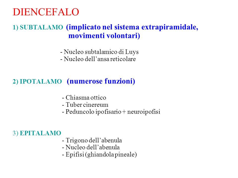 DIENCEFALO 1) SUBTALAMO (implicato nel sistema extrapiramidale, movimenti volontari) - Nucleo subtalamico di Luys - Nucleo dellansa reticolare 2) IPOT
