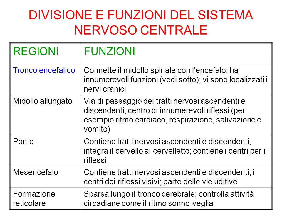 DIVISIONE E FUNZIONI DEL SISTEMA NERVOSO CENTRALE REGIONIFUNZIONI Tronco encefalicoConnette il midollo spinale con lencefalo; ha innumerevoli funzioni