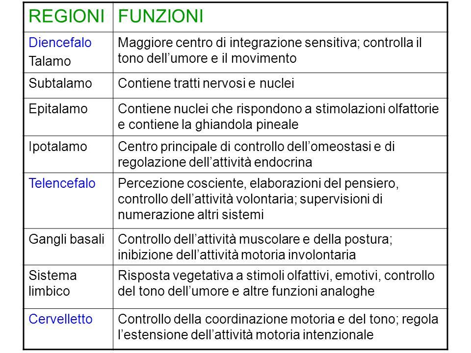 REGIONIFUNZIONI Diencefalo Talamo Maggiore centro di integrazione sensitiva; controlla il tono dellumore e il movimento SubtalamoContiene tratti nervo