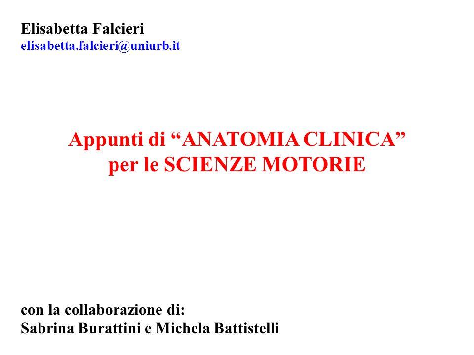 Elisabetta Falcieri elisabetta.falcieri@uniurb.it Appunti di ANATOMIA CLINICA per le SCIENZE MOTORIE con la collaborazione di: Sabrina Burattini e Mic