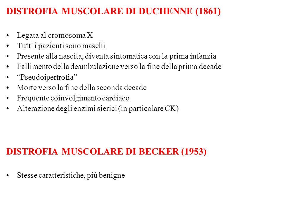 DISTROFIA MUSCOLARE DI DUCHENNE (1861) Legata al cromosoma X Tutti i pazienti sono maschi Presente alla nascita, diventa sintomatica con la prima infa